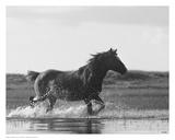 Run Like the Wind Art by Eve Turek