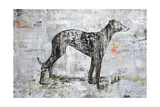 Greyhound Giclee Print by Henry Henry