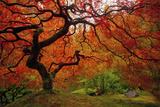 Tree Fire Reproduction photographique par  Darren White Photography