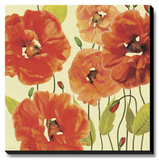 Poppy Express I Stretched Canvas Print by Anderson Jocelyne