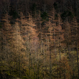 Soft Light Photographic Print by Doug Chinnery