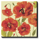 Poppy Express II Stretched Canvas Print by Anderson Jocelyne
