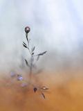 A Drop Fall Photographic Print by Heidi Westum