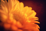 I Love the Sun Photographic Print by Philippe Sainte-Laudy