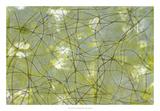 String Theory IV Premium Giclee Print by Jennifer Goldberger