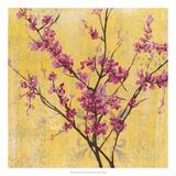 Fuchsia Blossoms I Premium Giclee Print by Jennifer Goldberger
