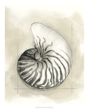 Shell Schematic II Premium Giclée-tryk af Megan Meagher