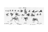 Scientific Illustrations of Mosquitos in Black and White Art