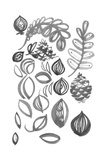 Pen-And-Ink Leaves and Pine Cones Poster