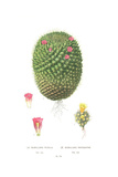 Botanical Drawing of Cactus Prints