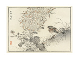 Sparrow with Mouth Opened Toward Chrysanthemums Premium Giclee Print