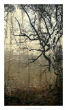 Wooded Solace III Premium Giclee Print by Jennifer Goldberger