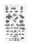 Black and White Beetle Illustrations Poster