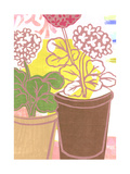 Potted Geraniums Print Poster