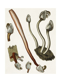 Scientific Illustrations of Oysters and Snails Sztuka