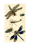 Dragonflies and Crawling Insects Posters