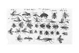 Multiple Black and White Illustrations of Winged Insects Posters