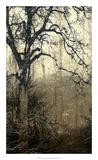 Wooded Solace I Premium Giclee Print by Jennifer Goldberger