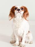 Portrait Dog Animal Posters by  Wonderful Dream