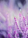 Purple Flower Bloom Nature Posters by  Wonderful Dream