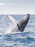 Sealife Ocean Whale Underwater Prints by  Wonderful Dream