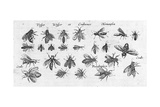 Scientific Illustrations of Winged Insects with Stripes Prints