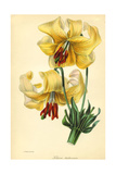 Lilies Prints
