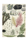 Sea Plants Posters