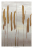 Reeds and Leaves II Premium Giclee Print by Jennifer Goldberger