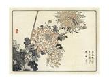 Flowering Chrysanthemums with Bug Illustration Premium Giclee Print