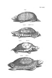 Black and White Turtles in Profile Art
