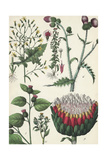 Thistles and Other Flowering Weeds Poster