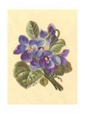 Stylized Violets Bouquet Premium Giclee Print