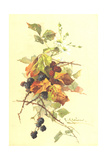 Blackberries with Leaves and Branches Posters