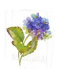 Short Stem of Purple Hydrangea Flowers Premium Giclee Print