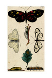 Butterflies and Caterpillars Art