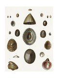 Scientific Diagram of Sea Shell Variations Posters