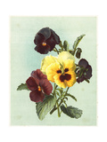 Painterly Pansies Bouquet Posters