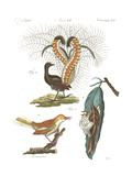 Tropical Bird and Peacock Illustrations Posters