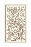 Etching of Roses on Tangled Branches Posters