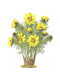 Grouping of Yellow Daisies Growing Out of Ground Prints