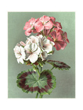 Painterly Geranium Bouquet Posters