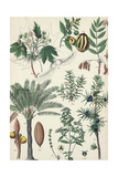 Scientific Drawing of Portions of Various Plants Affiches