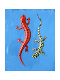 Red and Green Salamanders on Blue Background Prints