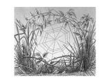 Black and White Stylized Web Between Grassy Stems Premium Giclee Print