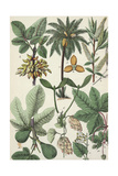 Multiple Botanical Drawings of Leaves and Seeds Affiches