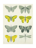Bold Graphic Butterfly Designs Premium Giclee Print