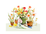 Watercolor of Tulips and Daffodils in Pots, Vase, and Bucket Prints