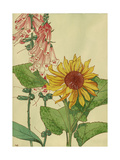 Print of Sunflower and Foxglove Plants Premium Giclee Print