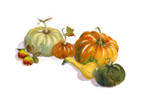 Watercolor of Pumpkins, Squash, and Apples Premium Giclee Print